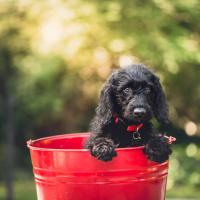 【夕やけ大衆EYE】性病探知犬は実現可能なのか?
