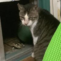 【剛腕記者・山岡の目】新宿の我が家にカエルが…処刑場や異常気象との因果関係